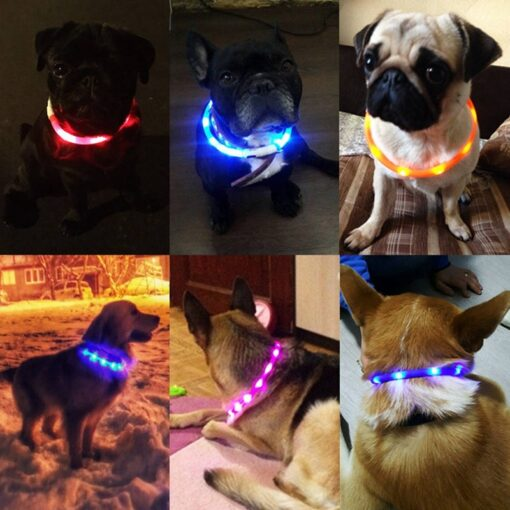 Cute Dogs with LED Collars Easily Seen