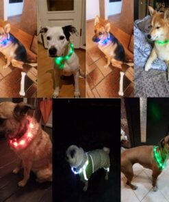 Funny Dogs with Illumination Collars